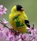 Burung hizbullah